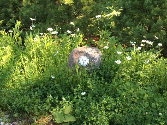 Mile marker on a stone with wild flowers on the Fry Brook Recreation trail